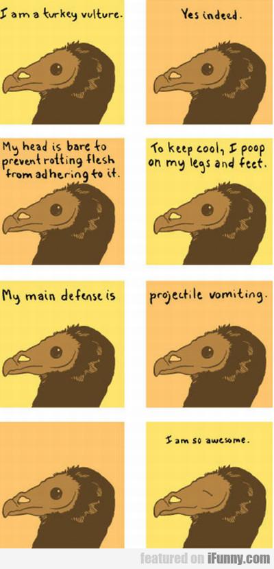 I Am A Turkey Vulture