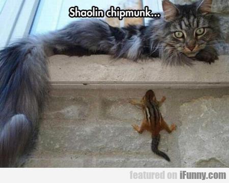Shaolin Chipmunk