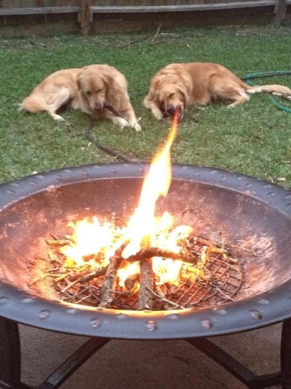 3.) This dog has been watching too much Game of Thrones.
